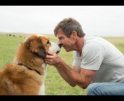 Bailey – Ein Freund fürs Leben Trailer